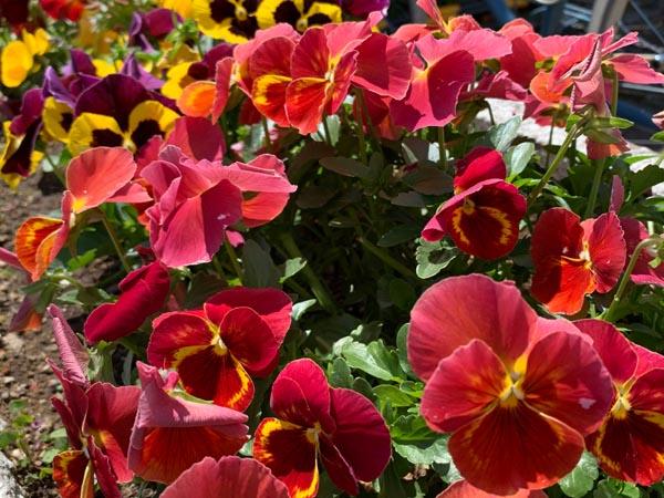 flowers-ag_7604a.jpg